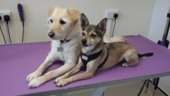 Louie and whisper - salon dogs!